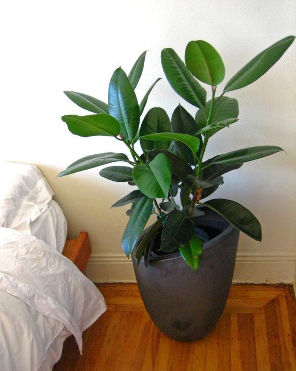 10-air-purifying-plants-for-your-home-&-office_08