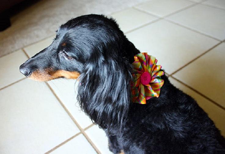 dog-collar-2