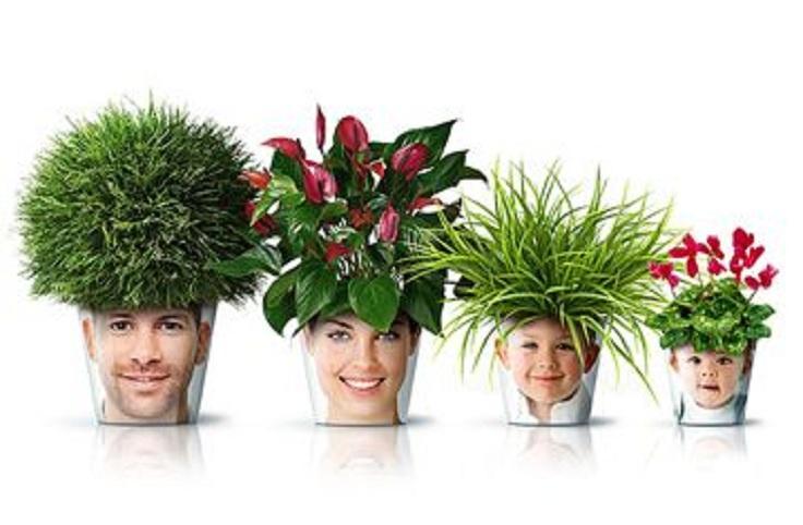 flower_pots_1_360x236-25390-900-500-80-c