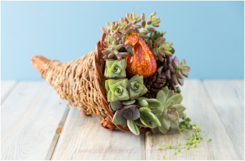Try-something-different-this-Thanksgiving-with-a-succulent-cornucopia-centerpiece-585x390