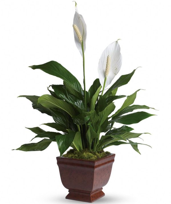 10 Air Purifying Plants For Your Home
